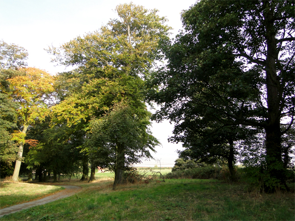 south-ferriby-countryside