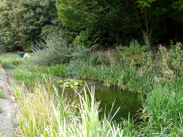 south-ferriby-pond